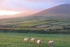 Péninsule de Dingle, County Kerry, 16 novembre 2014, 16:29